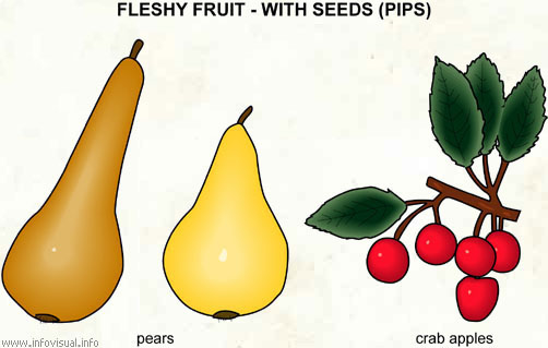 Fleshy fruit - with seeds (2)
