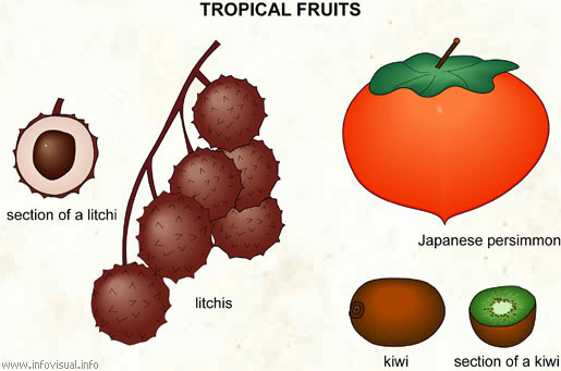 Tropical fruits (3)
