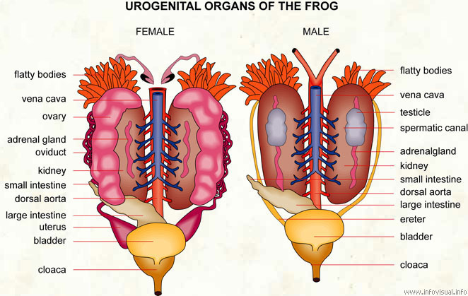 Posessing male and female sex organs
